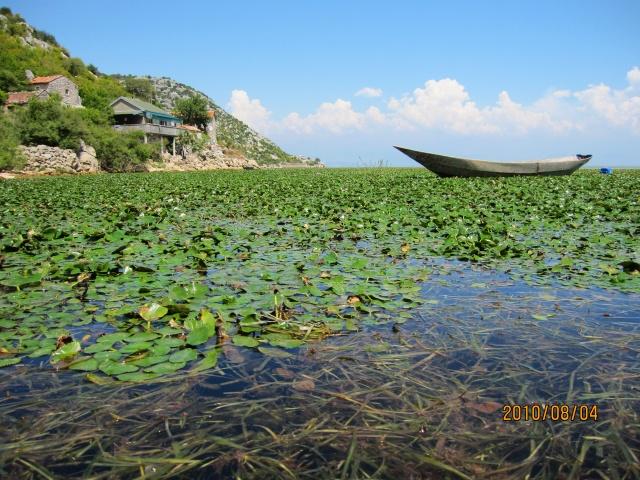 Скадарское озеро. Фото Лены Цагадиновой